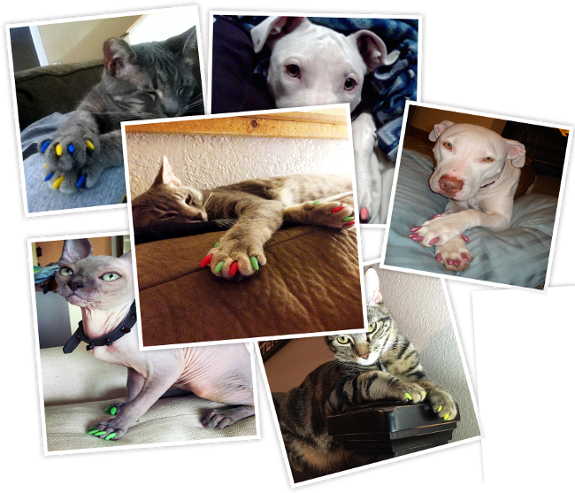 Purrdy Paws Hall of Fame